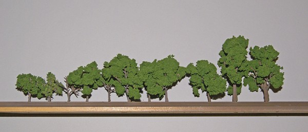 A row of drying trees.